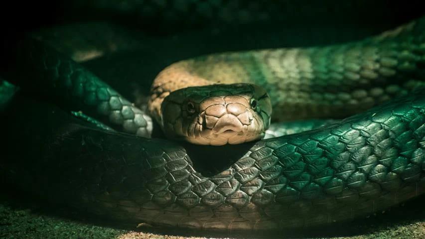 ตีเลขเด็ดเมื่อฝันเห็นงูเข้าบ้าน