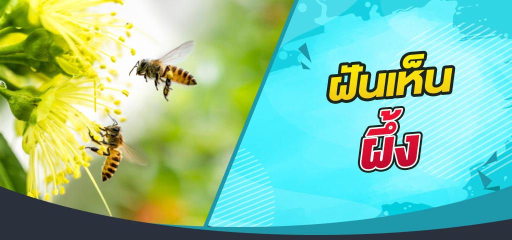 ทำนายฝันเห็นผึ้งพร้อมตีเลขเด็ด เลขนำโชค